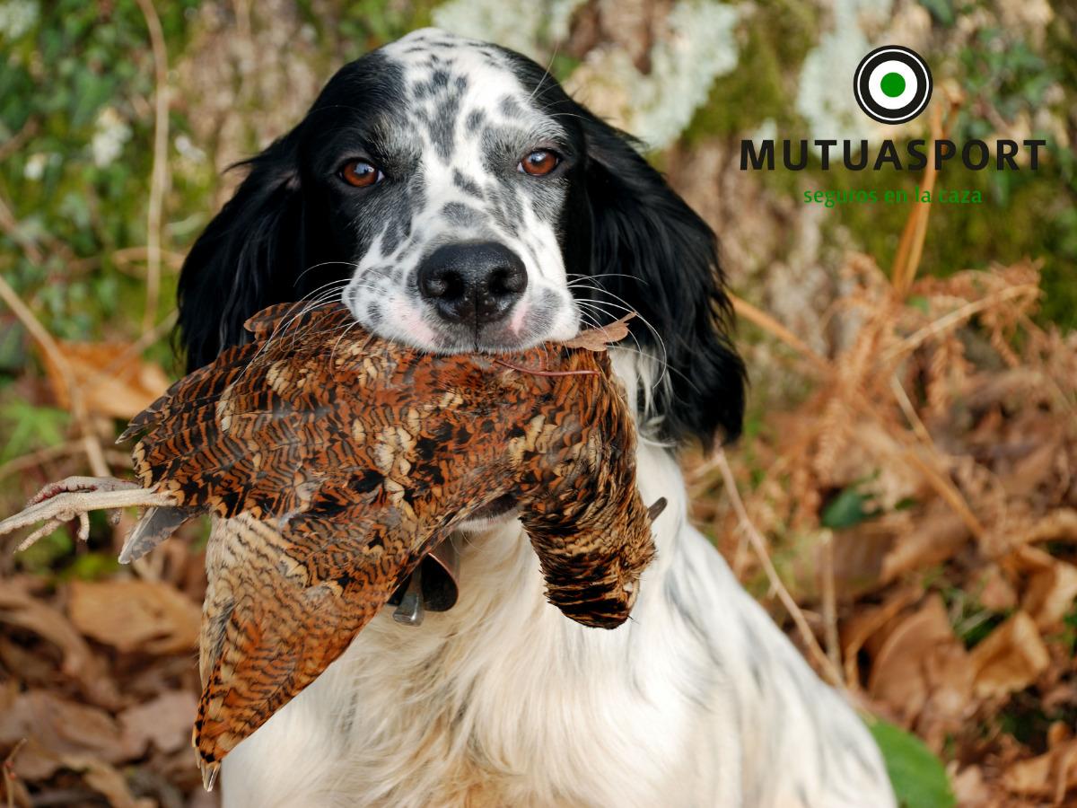 Características de un buen perro de caza