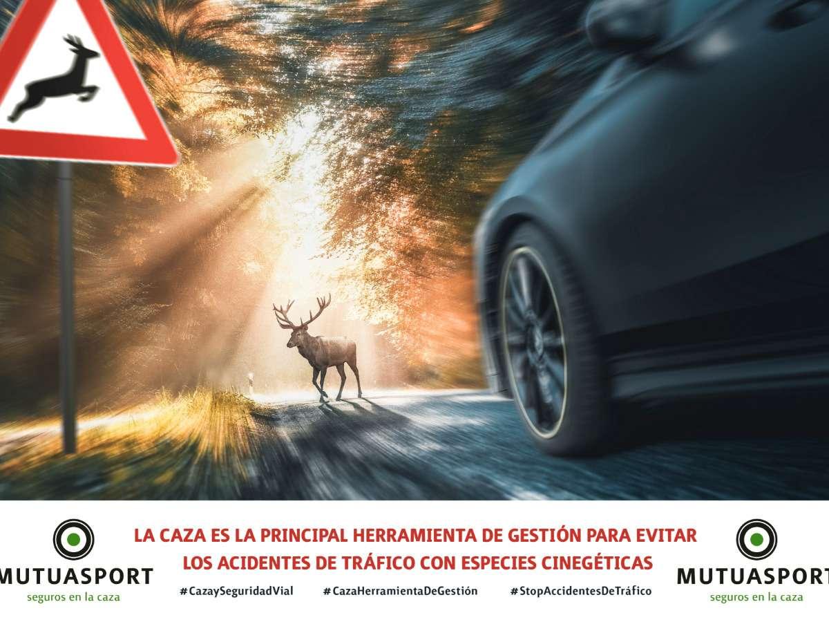 Mutuasport lanza un vídeo sobre la necesidad de la caza  ante los accidentes de tráfico.
