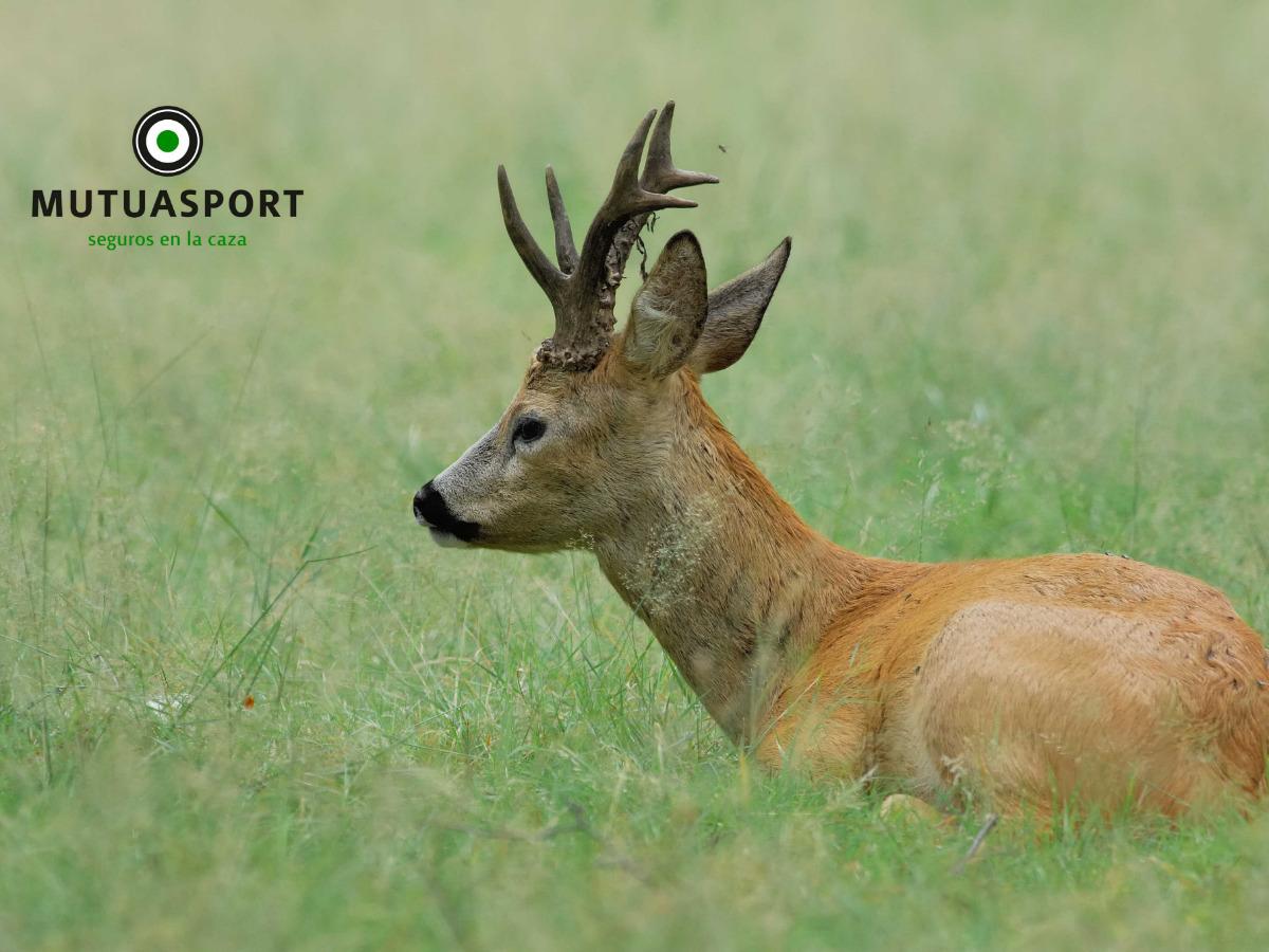 ¿Por qué deben participar los cazadores en la Ley de Bienestar Animal?