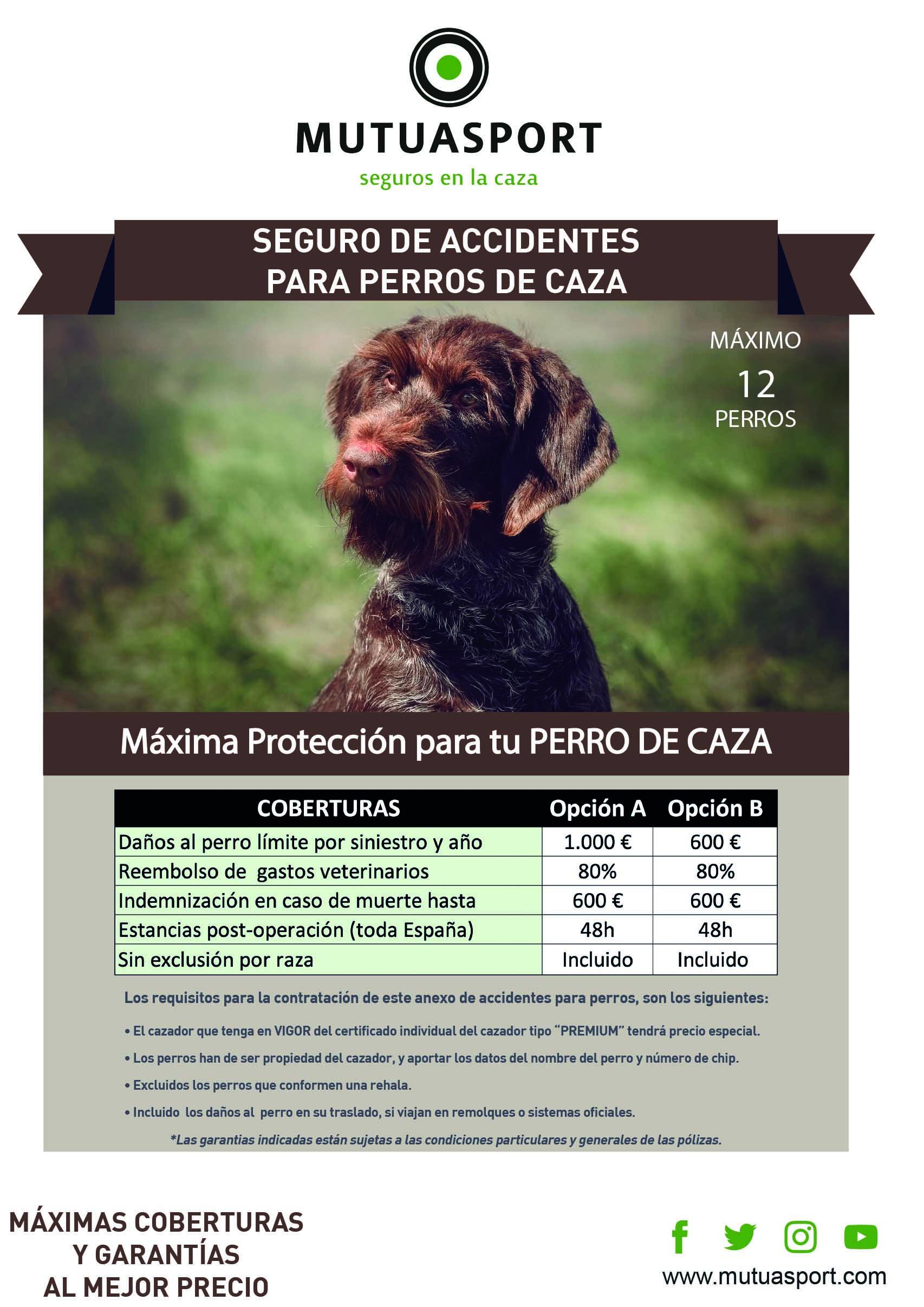 Seguro de ACCIDENTES PARA PERROS DE CAZA