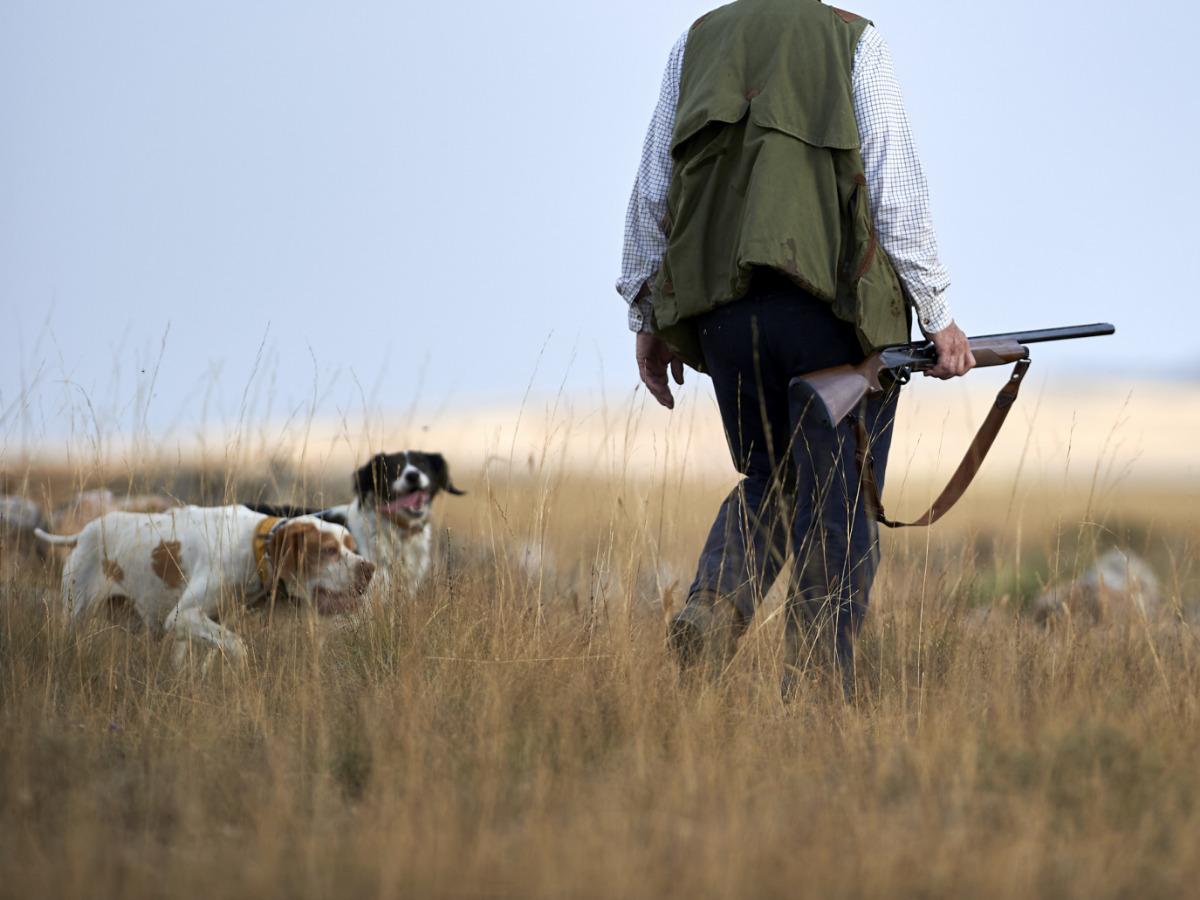 Seguros de perros de caza